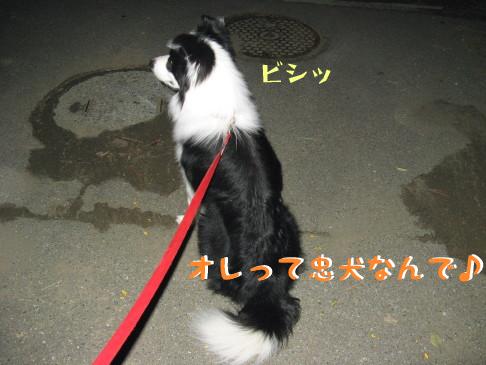 IMG_0010_1.jpg