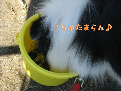 IMG_0010_2.jpg