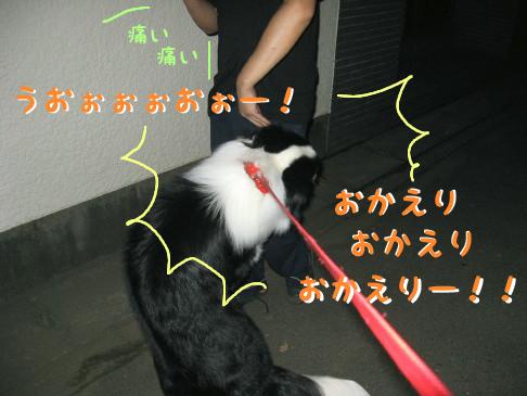 IMG_0011_6.jpg