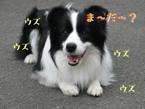 IMG_0014_2.jpg