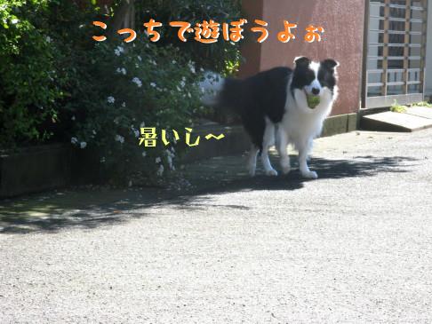 IMG_0016_10.jpg