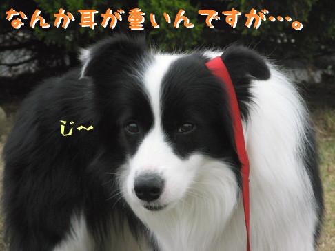 IMG_0021_5.jpg