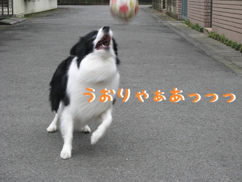 IMG_0034_6.jpg