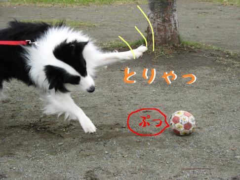 IMG_0043_4.jpg