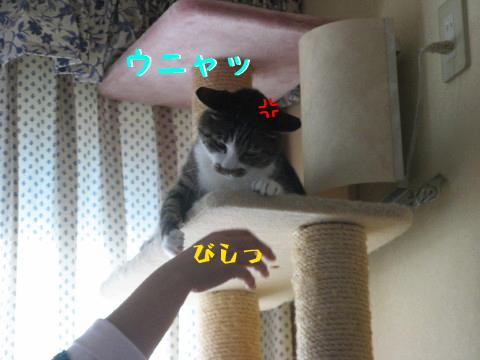 IMG_0045_4.jpg
