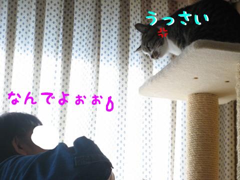 IMG_0050_5.jpg