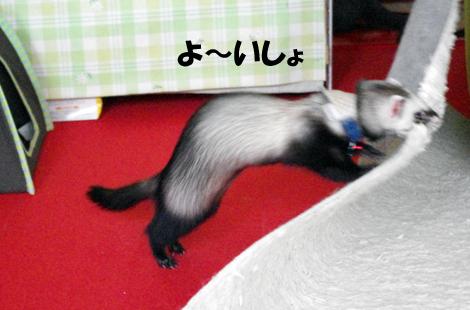 2011061104.jpg
