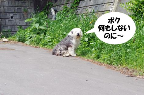 2011061507.jpg