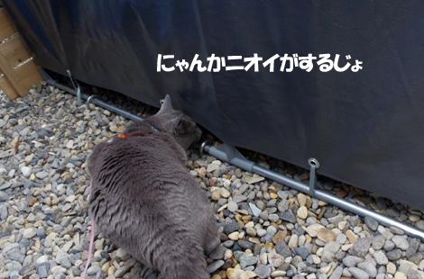 2011062101.jpg