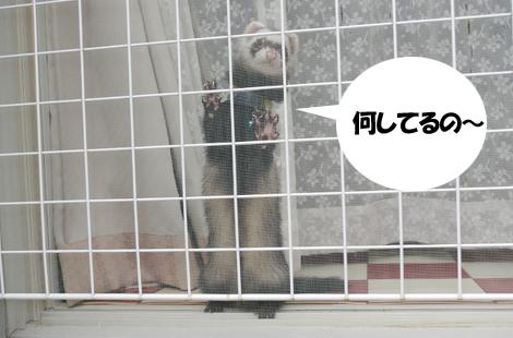 2011071203.jpg
