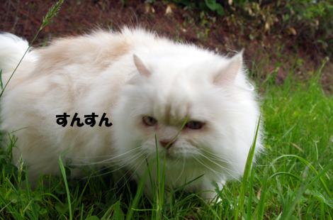 2011071503.jpg