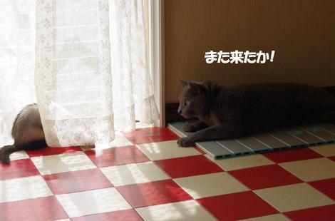 2011072007.jpg