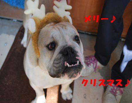 DSC_0034_20111230215830.jpg