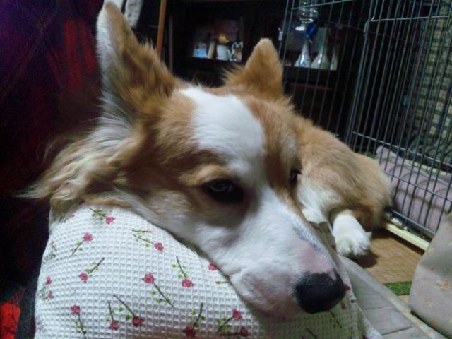 自分の枕2