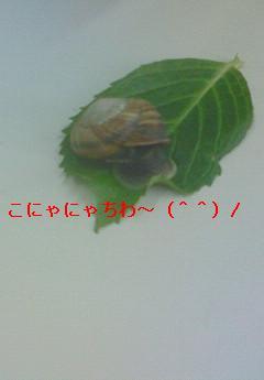 katatumuri33.jpg