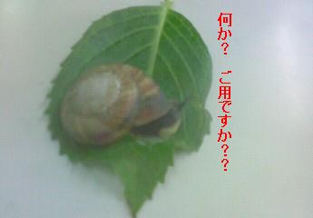 katatumuri44.jpg