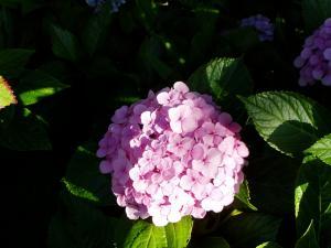 pinku_convert_20110807231944.jpg