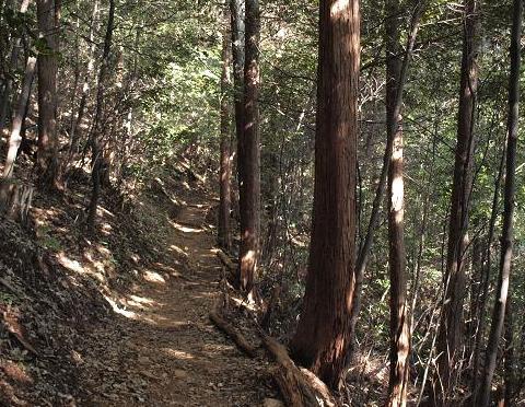 檜の道 095