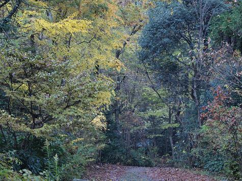 三田洞の森 040