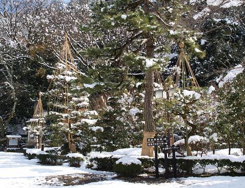 雪吊 022