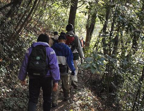 樹林を行く 038
