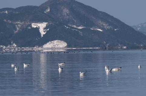 奥琵琶湖 216