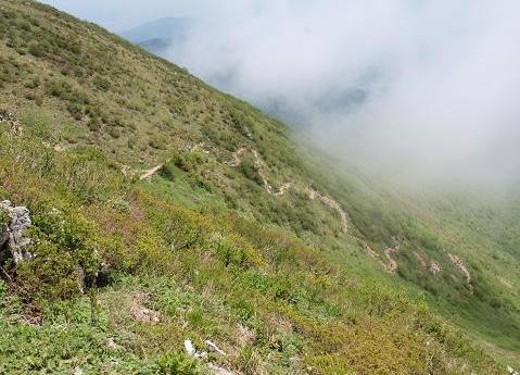 上野登山道 220