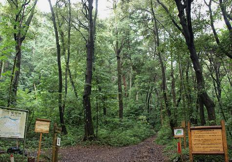 国有林 065