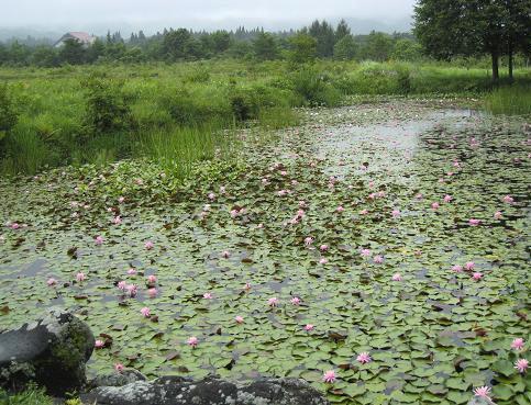 植物園 028