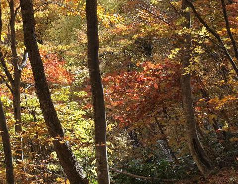 森の錦 079