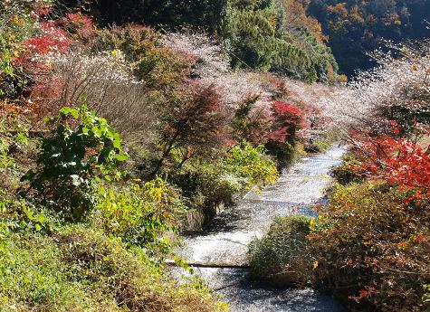 紅葉と桜 062
