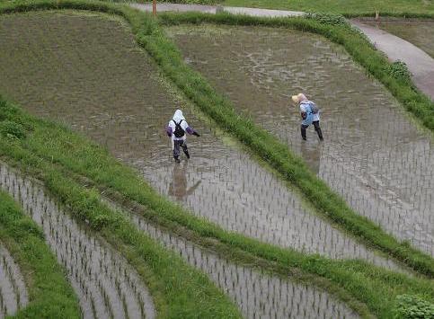 農作業 059
