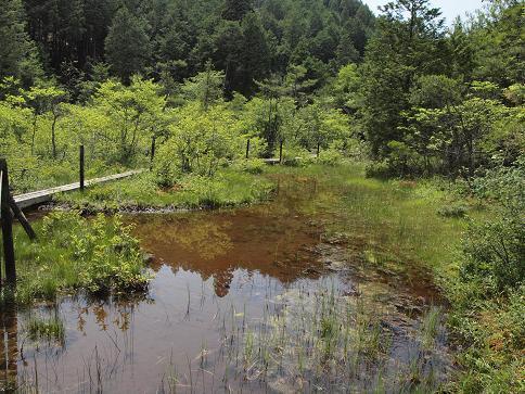 湿原 204