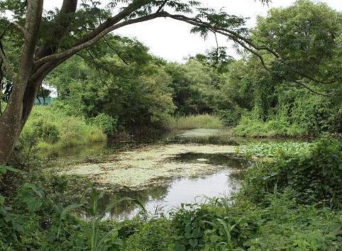 アサザ池 186