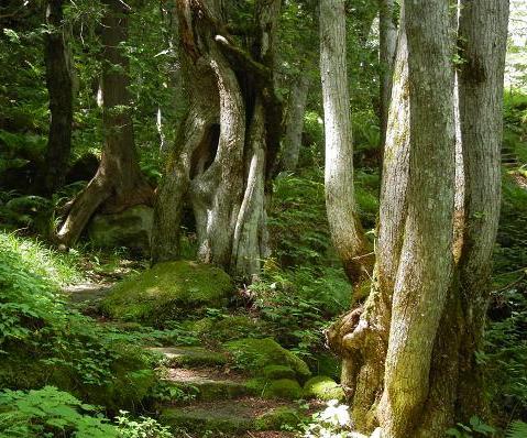 登山道の木146