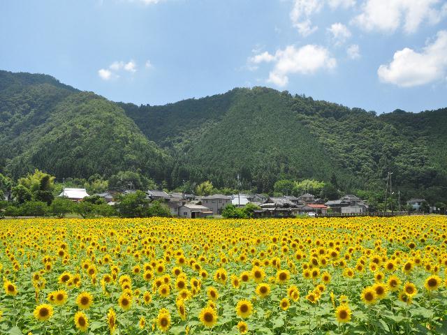 himawari1 045