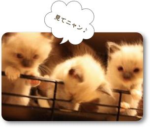 ☆ホームページへ☆