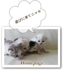 ☆ホームページへGO☆