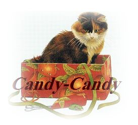 Cattery *Candy-Candy*