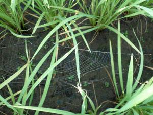 よしかわクモの巣2