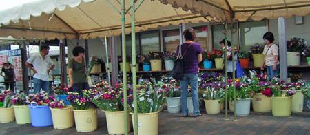 四季菜の郷花市