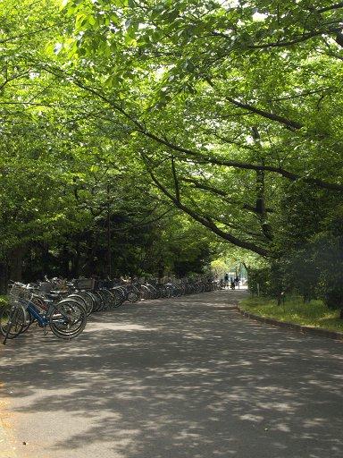 夏へと誘う自転車