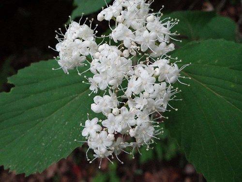 6 木の花