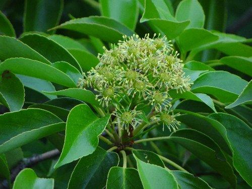 a 木の花s