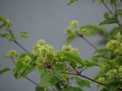 b 木の花d