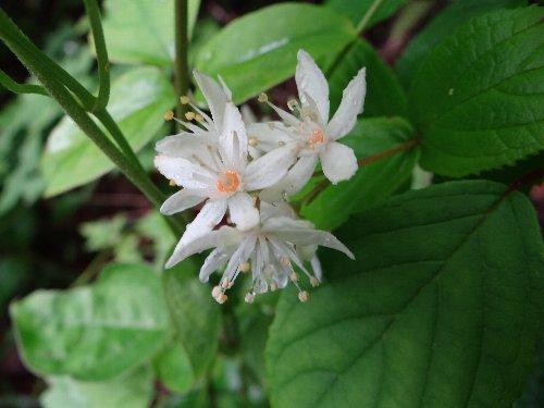 2 木の花s