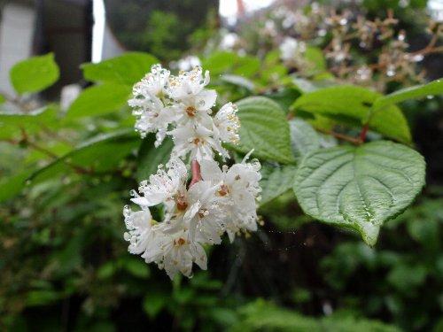 9 木の花dfd