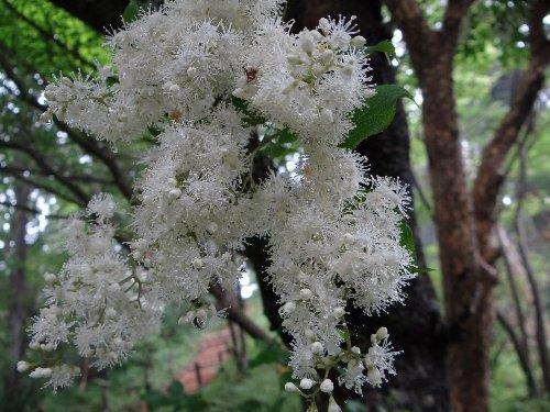 i 木の花です