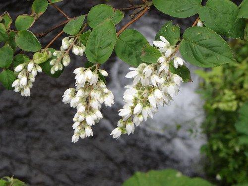 r 木の花f