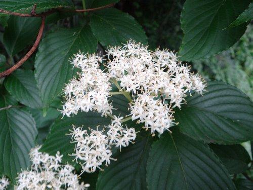 110626 木の花q